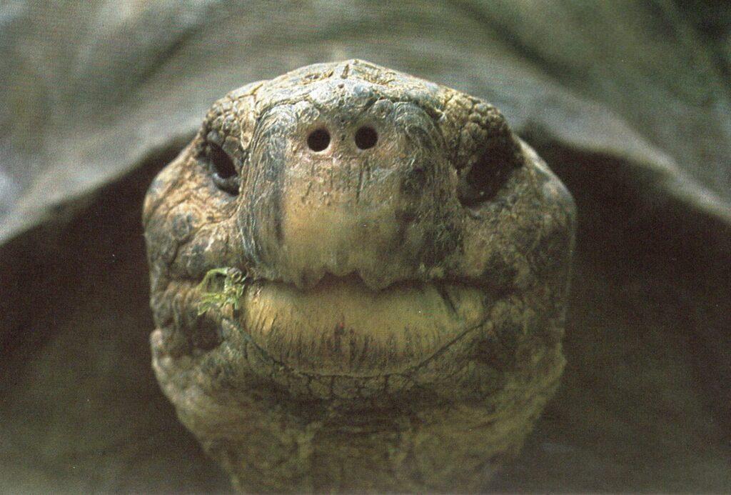 Öga mot öga med galápagossköldpadda, Urtid i Nutid, sid. 18